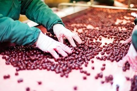 The facts about allergy compliance in food processing